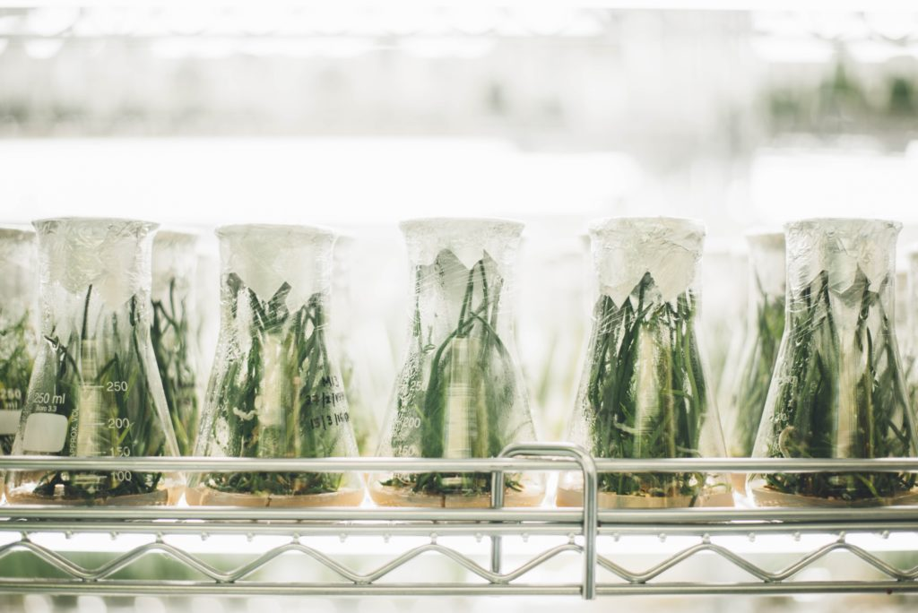 A row of green plants in glass beakers