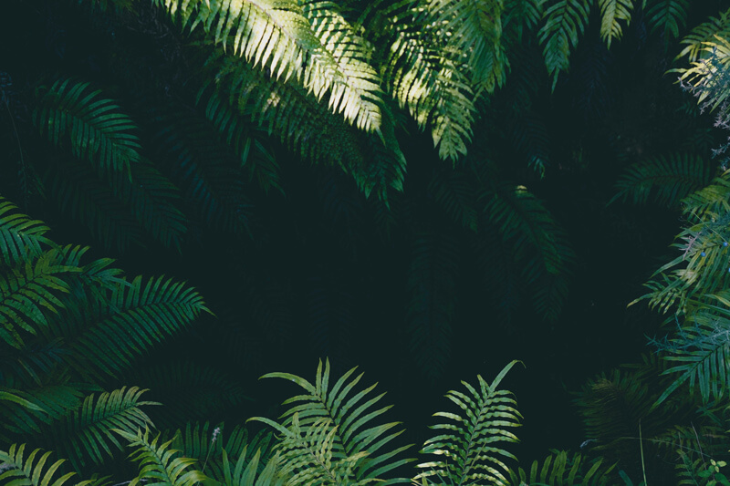 A shaded rainforest