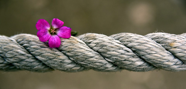 Rope and a flower